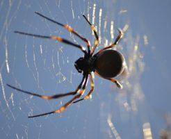 蜘蛛 種類 日本 世界 数