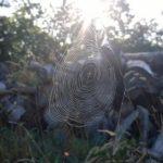 朝と夜で意味が違う?蜘蛛のスピリチュアルサインとは?