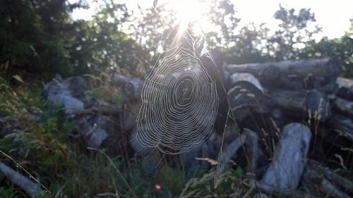 夜 朝 蜘蛛 スピリチュアル 意味