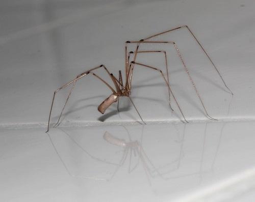 蜘蛛 赤い 小さい 大きい 細い