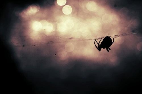 家 緑 蜘蛛 スピリチュアル 意味
