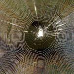 蜘蛛の糸はどうなっている?蜘蛛が巣を作る理由とくっつかない理由は?