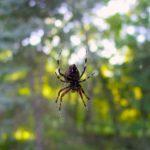蜘蛛を退治するとどうなる?夢占いで蜘蛛から逃げる、蜘蛛を逃がすことの意味とは?