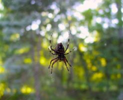 蜘蛛 夢占い 逃がす 逃げる 退治