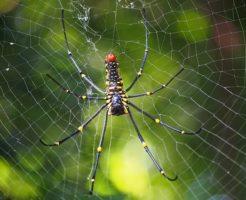 蜘蛛 赤 黄 黒