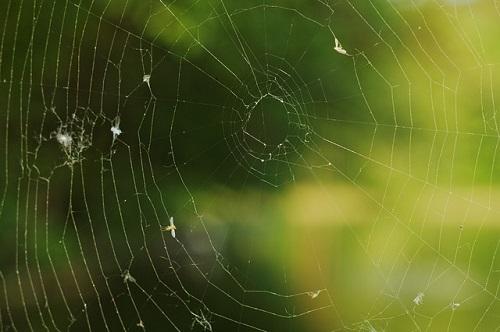 白い 蜘蛛 縁起