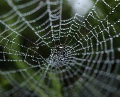 夢占い 蜘蛛 赤い 白い