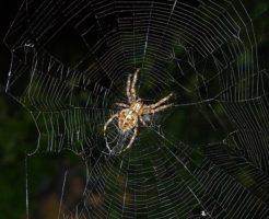 蜘蛛 家 守り神 縁起