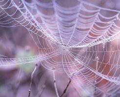蜘蛛 糸 顔