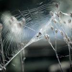 蜘蛛の糸の仕組みや出し方、種類とは?