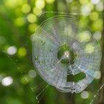 海外にいる蜘蛛の種類