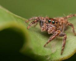蜘蛛 目 見え方 光る