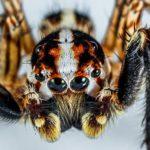 蜘蛛が怖い、夢の心理