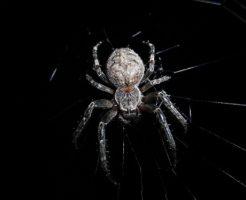 蜘蛛 家 冬
