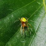 子供を背中で育てる蜘蛛とは?