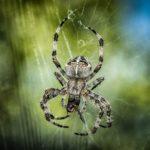 蜘蛛の卵の駆除、殺虫剤の種類