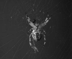 蜘蛛 蟻 食べる 食べない