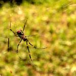 蜘蛛の祖先は蟹?それとも仲間?