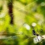 網戸・ベランダ・庭にいる蜘蛛への対策とは?