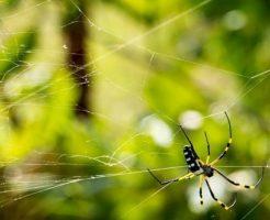 蜘蛛 対策 網戸 ベランダ 庭