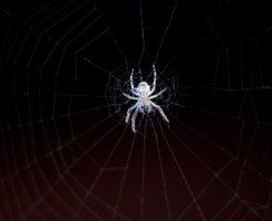 蜘蛛 卵 孵化 時期 何日 何匹