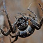 蜘蛛が怖いのは病気のせい、 克服の仕方