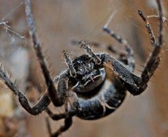 蜘蛛 怖い 病気 克服