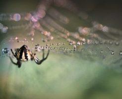 蜘蛛 消化液 成分