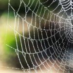 北海道には毒蜘蛛はいるのか