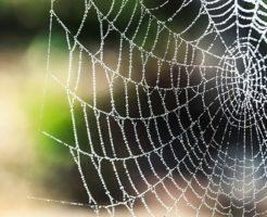 蜘蛛 北海道 毒