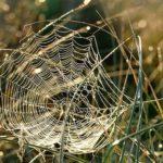 蜘蛛の糸の繊維で服を作ることが出来るって本当?