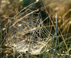 蜘蛛 糸 繊維 服
