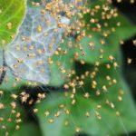 蜘蛛の繁殖、産卵の時期っていつ?