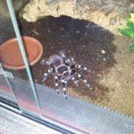 蜘蛛の飼育するのが難しい種類と餌と水やりについて?