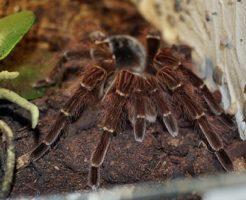 蜘蛛 飼育 初心者 おすすめ 種類
