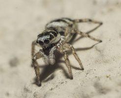 蜘蛛 赤 黒 小さい 種類