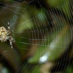 蜘蛛は冬眠をしない?蜘蛛の冬の過ごし方について