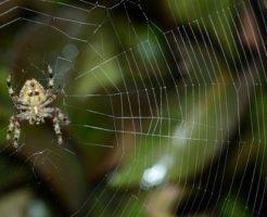 蜘蛛 冬 冬眠