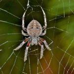 蜘蛛はなぜ発生する?家に寄ってくる理由と嫌いな理由とは?