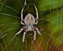 蜘蛛 寄ってくる 発生 嫌い 理由