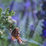 ヒメグモ科の中でも大きいサイズの蜘蛛オオヒメグモと白い子供達
