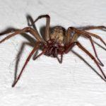 アパートやマンションに出る蜘蛛の種類と原因、対策とは?