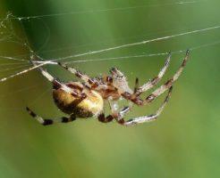 蜘蛛 糸 毒 どこから