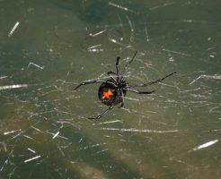 蜘蛛 赤い 小さい 1cm 駆除 方法