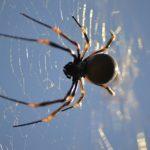 日本で良く見る蜘蛛の種類や数は?世界には何種類の蜘蛛が居るのか?