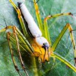 緑色と赤色が特徴の蜘蛛『ササグモ』とは?