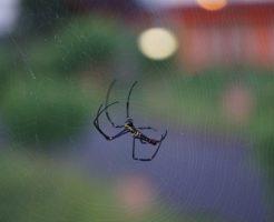蜘蛛 対策 車