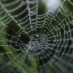 【蜘蛛の夢占い】夢で見たクモは赤いクモか白いクモか?